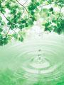 タイトル:葉と雫