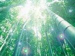 竹林と木漏れ日
