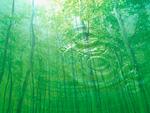 森林と波紋