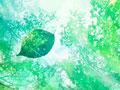 新緑の森と木漏れ日