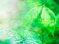 タイトル:新緑と川