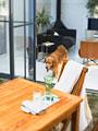 イヌとガーデンテーブル