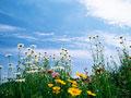 タイトル:花畑と空