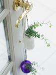 ブリムストーンとドア