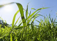 青空と草むら
