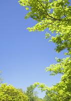 青空と樹木