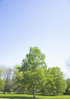 青空と森林