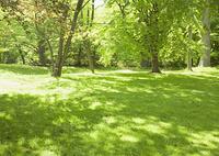 木陰の芝生