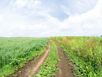 青空と野道