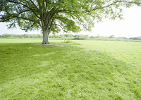 樹木と草原