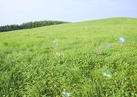 草原とシャボン玉