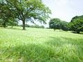 草原と樹木