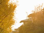 住宅街の紅葉