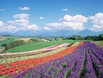 花畑と十勝岳連峰