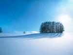 雪原の樹木