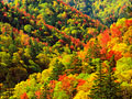三国峠の紅葉