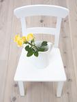 椅子とバラ