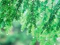 タイトル:水滴と葉