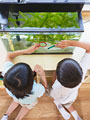 水槽の観察をする小学生