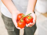 トマトを持つ小学生の手