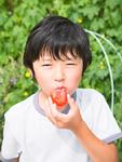 トマトを食べる小学生