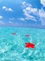 海に浮かぶハイビスカス