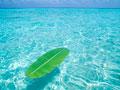 海に浮かぶバナナの葉