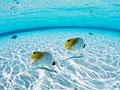 タイトル:海中の魚
