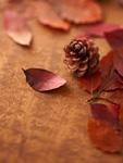 落ち葉と松ぼっくり
