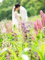花畑でキスをする新郎新婦