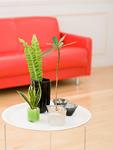 テーブルの観葉植物