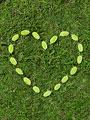 ハート形の葉