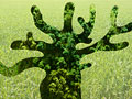 タイトル:樹木イメージ