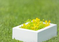 花のギフト