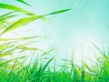 タイトル:草原