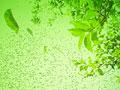 タイトル:水中に漂う葉