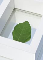 1枚の葉とフレーム