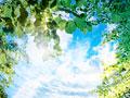 タイトル:青空と葉
