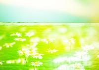 水面と花畑