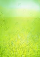水中の草原
