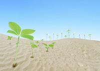 砂漠と若芽