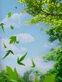 青空と木の葉