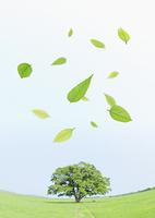 草原の木と葉
