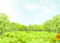 森林と青空