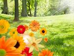 草原と花々
