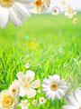 タイトル:白い花々