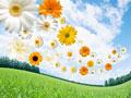 タイトル:草原と花々