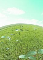 草原の双葉