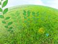 草原と若葉