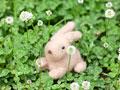 ウサギのぬいぐるみ